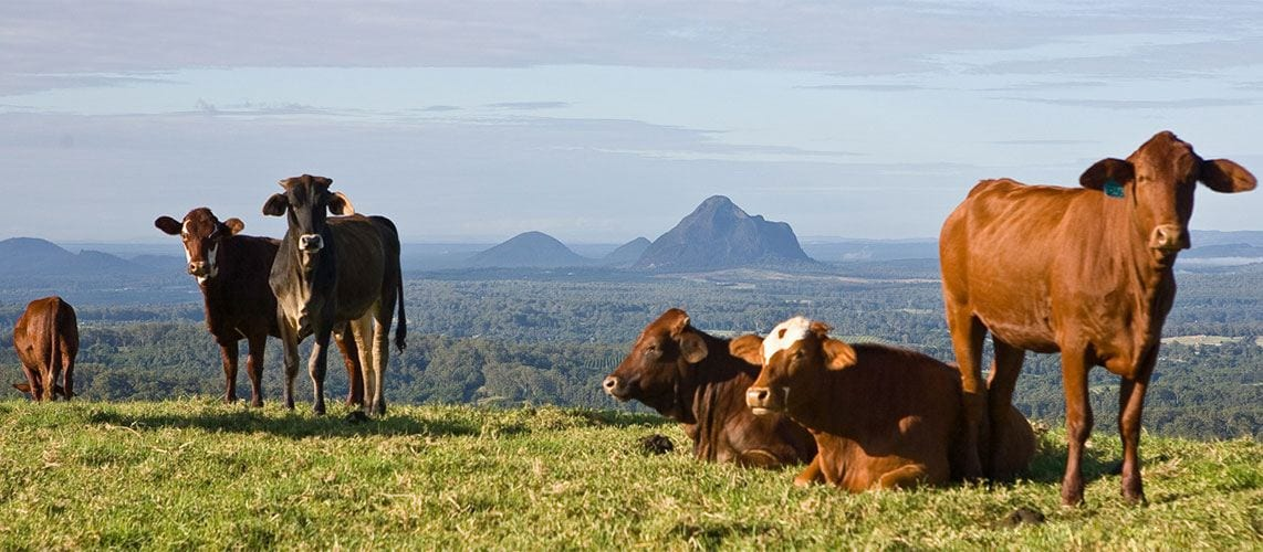Maleny, Queensland